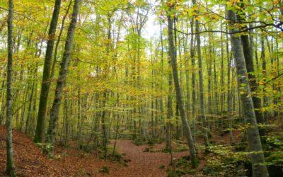 Parcs Naturals de Girona
